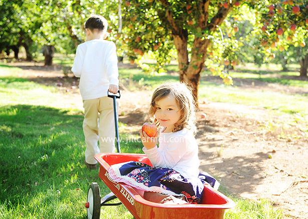 apple orchard family portraits in Sacramento