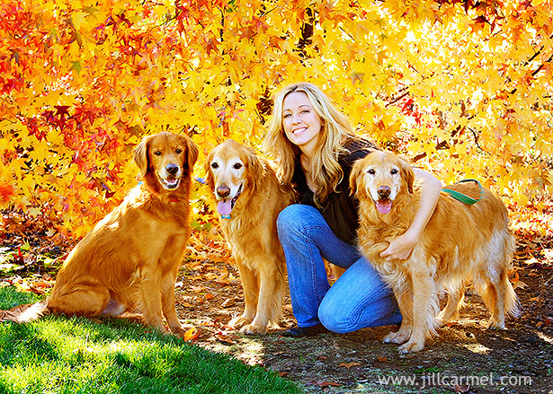 autumn pet portraits in front of colorful yellow tree