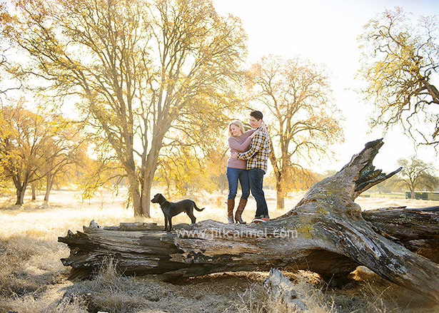 husband and wife standing on a big fallen tree with their dog