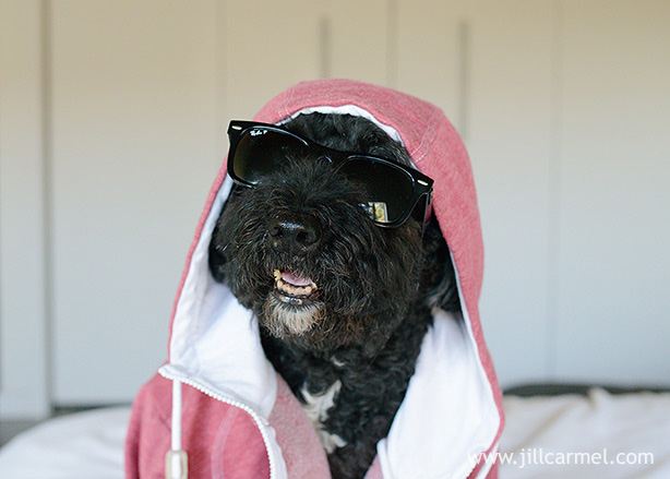 goofy dog portrait with sunglasses and a hood