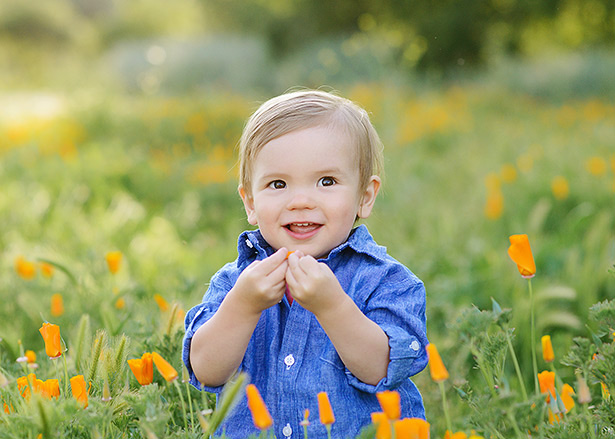 one year old and playing with orange poppies in a flower field in davis