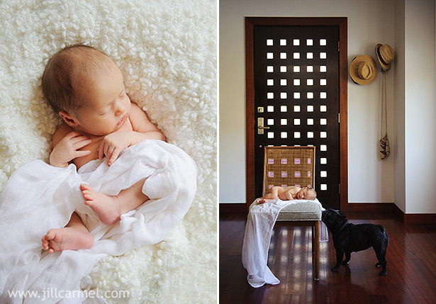 hip modern trendy newborn portraits in the home with a french bulldog
