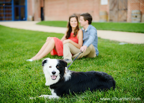 sitting on the grass with their border collie dog with beautiful grass and brick background at the old sugar mill in sacramento