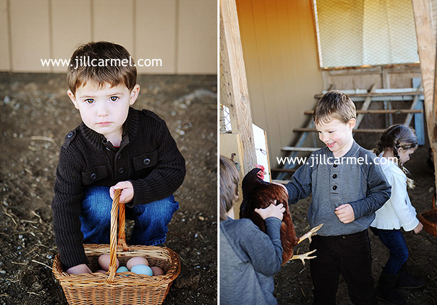 playing with the chickens for their pictures at the farm in elk grove