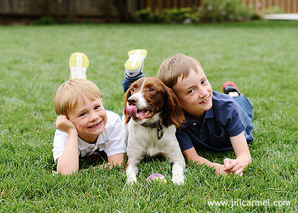 sacramento brothers lying on the lawn for pictures with their spaniel dog