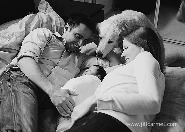 dog meets baby in their family portrait