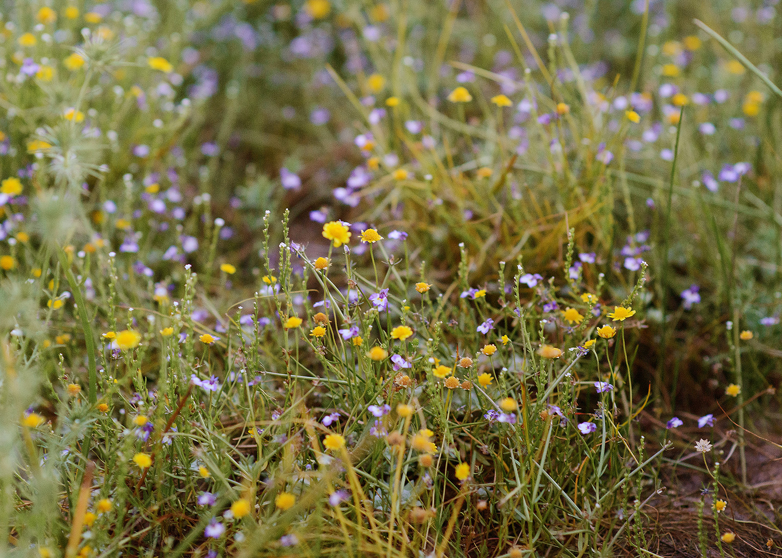 a sea of wildflowers