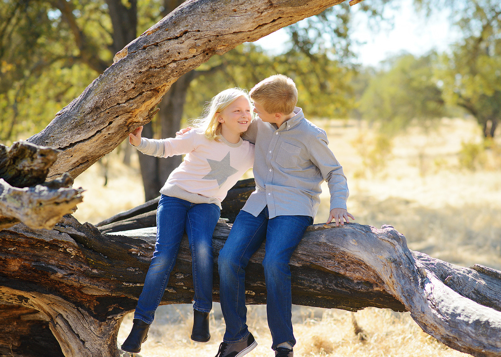 fair oaks family portraits on an artistic tree for fall pictures with photographer jill carmel