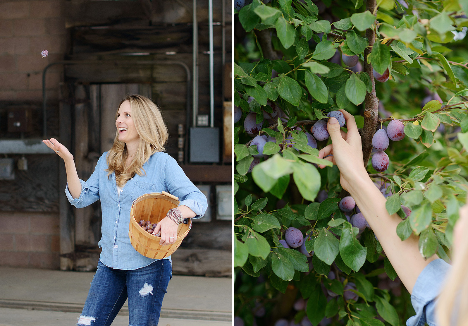 Woman in Chambray Picking Fresh Prune on Live Oak Farm for Editorial Shoot