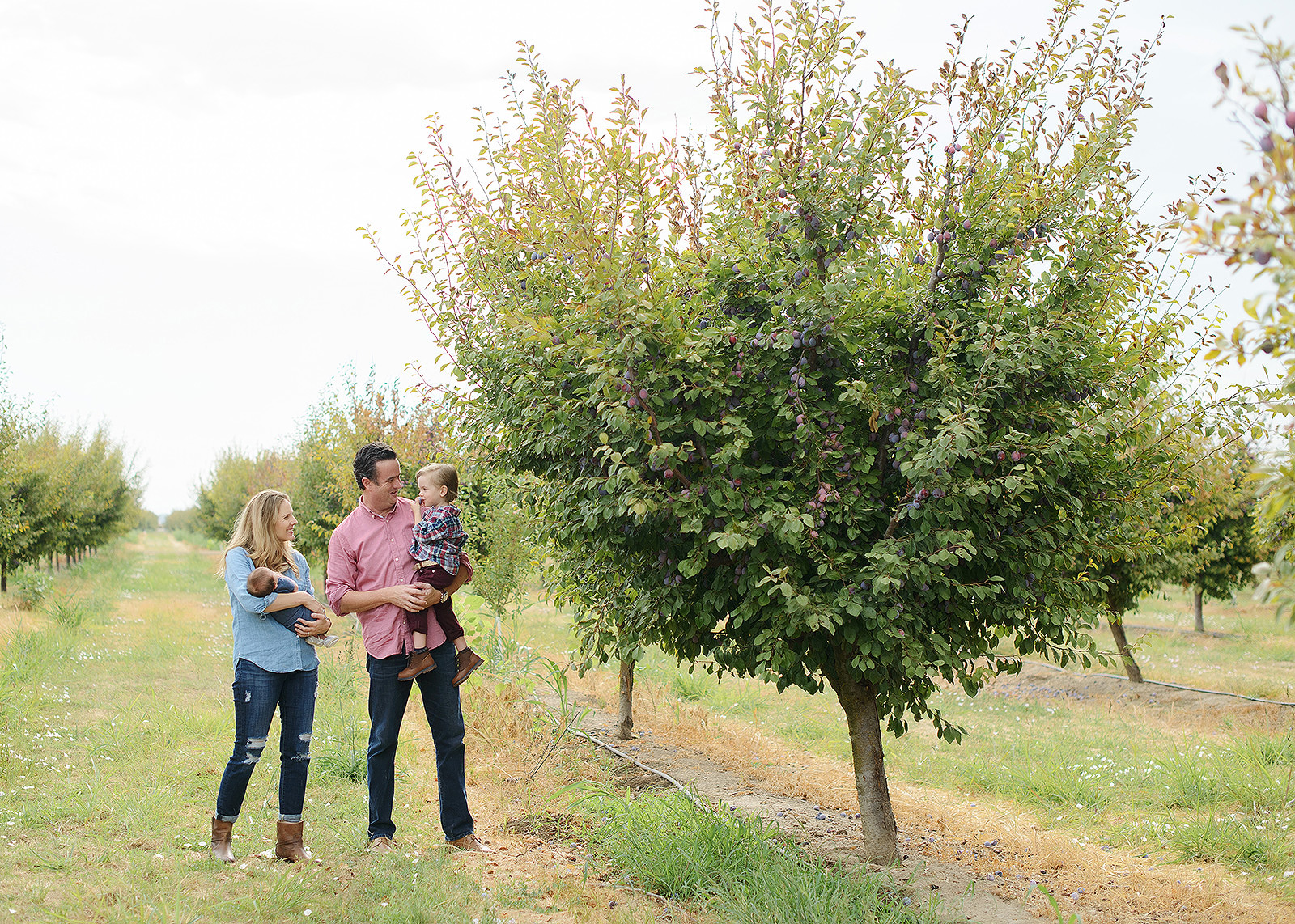 editorial shoot at a prune farm in live oak  california