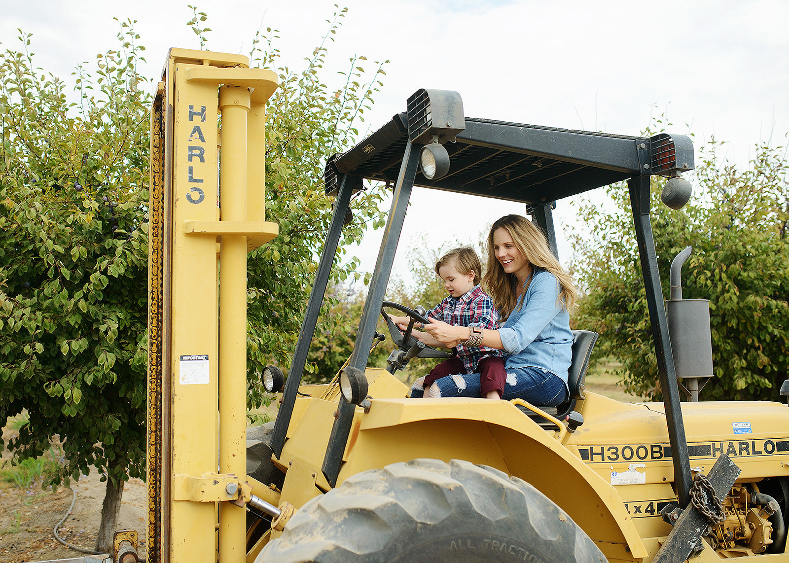 Mother and Son Harvesting Prunes on a Tractor on a Prune Farm for Editorial Shoot