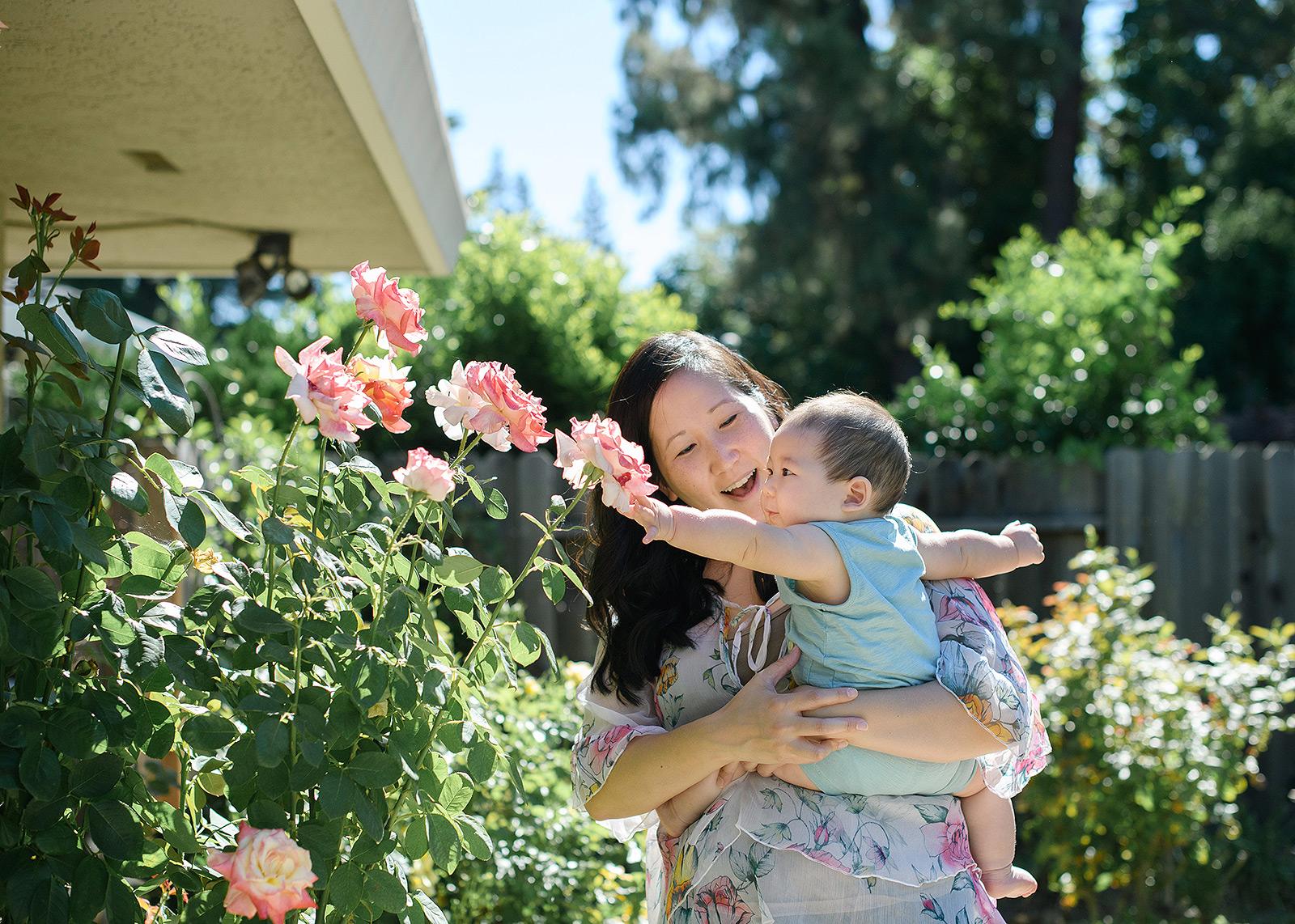 6 month baby boy touching pink roses backyard in Sacramento