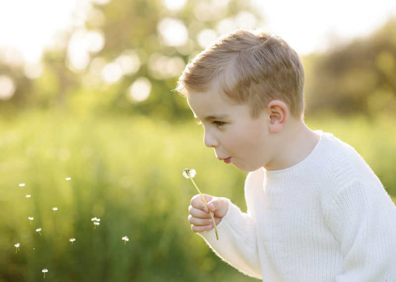 Blonde boy blowing on a dandelion in natural light in Davis outdoors