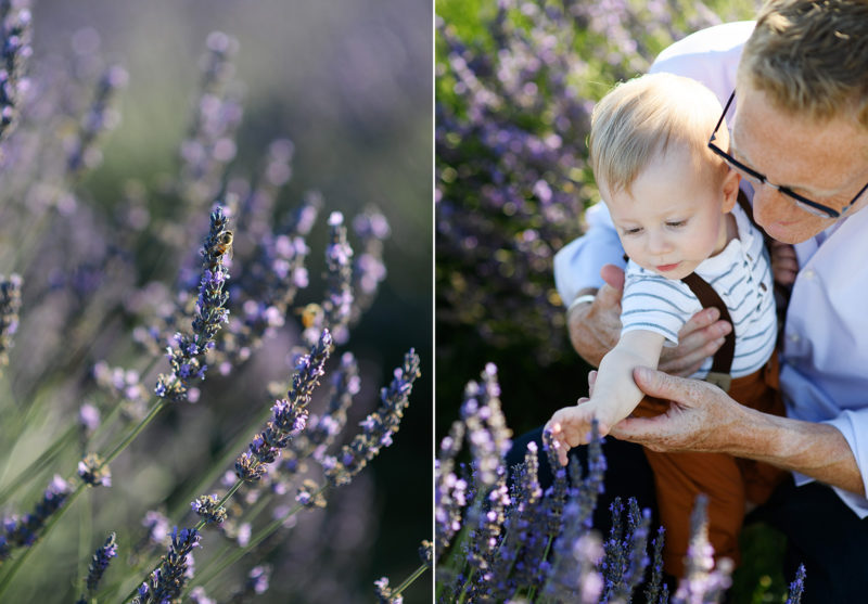 Sacramento photographer photographing father snuggling his son in lavender field