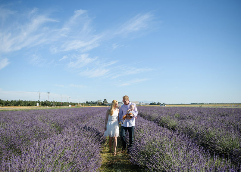 Family walking through lavender field with large blue sky background in Dixon