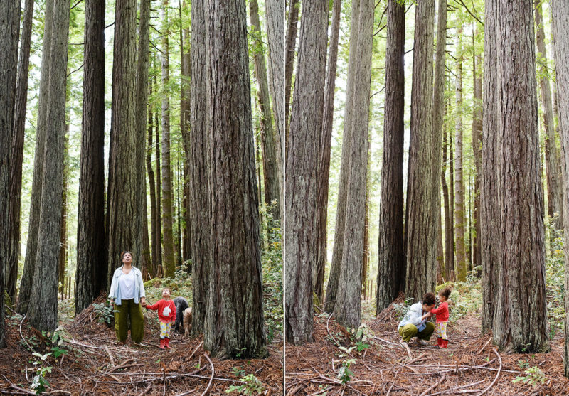 Mom and daughter looking up at the tall redwood trees in backyard of Mendocino home