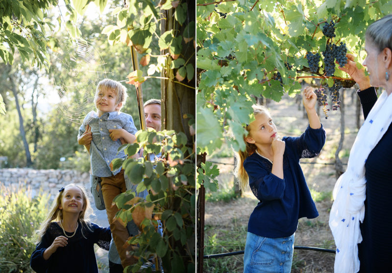 Son looking at spiderweb and daughter picking grapes in Quarryhill Botanical Garden Sonoma