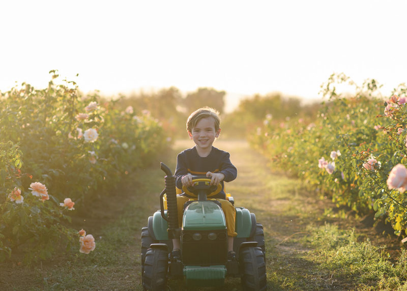 Little boy smiling as he rides on toy John Deere tractor in between rows of rose bushes in Sacramento Valley