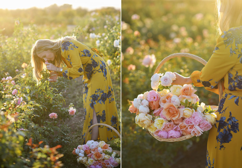 Mom smelling roses and holding a basket of colorful roses during sunset at a flower farm in Sacramento Valley
