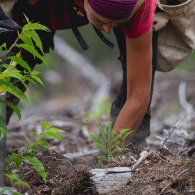 One_Tree_Planted-66