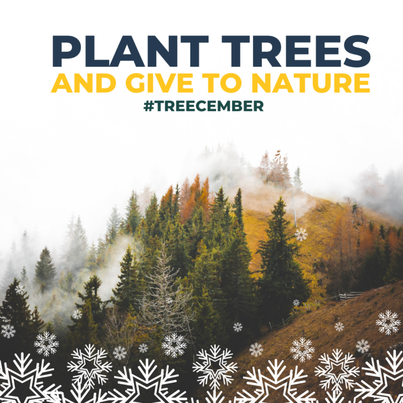 One Tree Planted Graphic Treecember Plant Trees