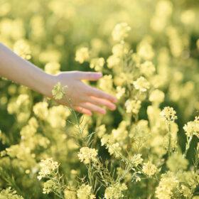 Hands touching yellow wildflowers as she walks Sacramento