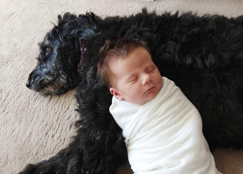 Newborn baby lying on black shaggy dog shot with phone camera Sacramento