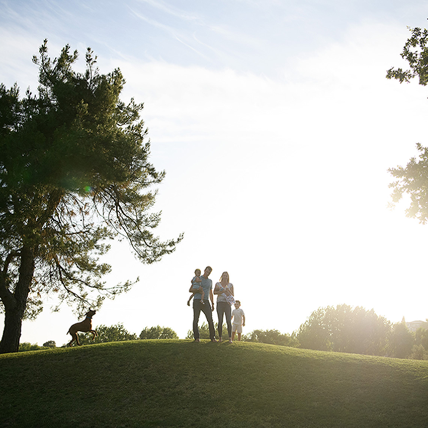 Family and dog silhouette while standing on a grassy hill and large tree in Rocklin
